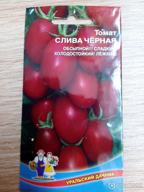 специальном томат слива черная отзывы фото вариант