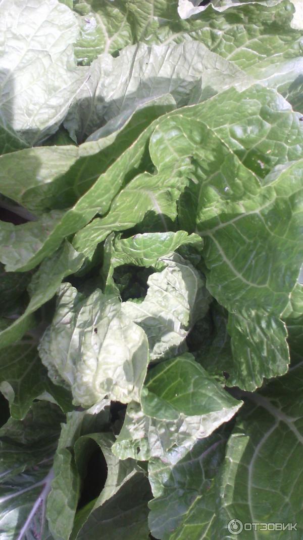 Салат из савойской капусты рецепты с фото должен