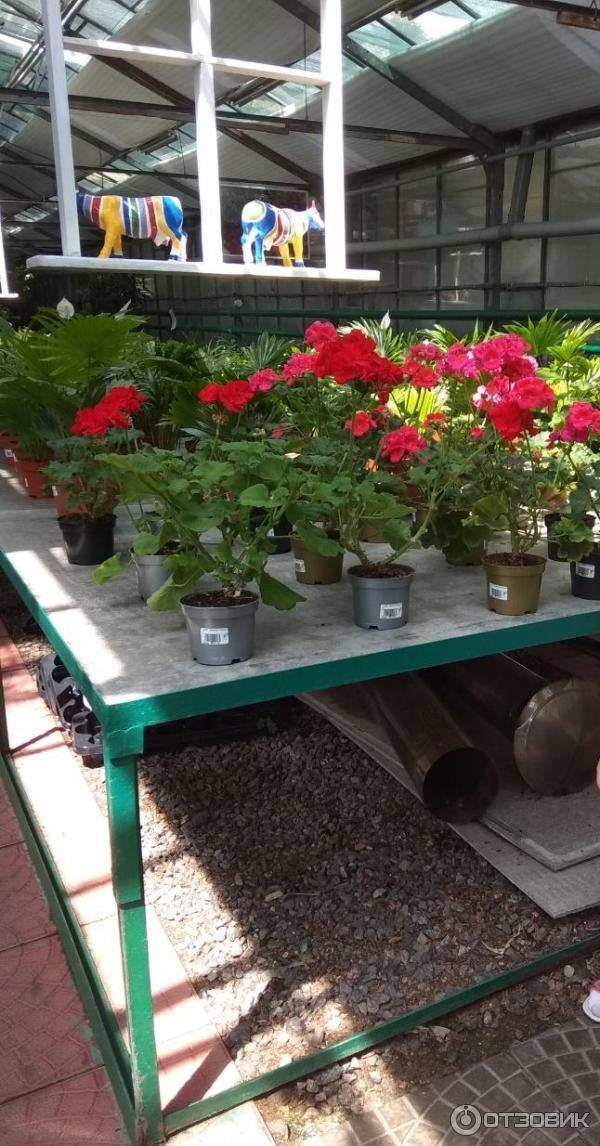 Ваш Сад Магазин Цветов