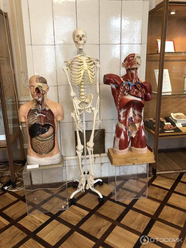 Музей гигиены спб фото
