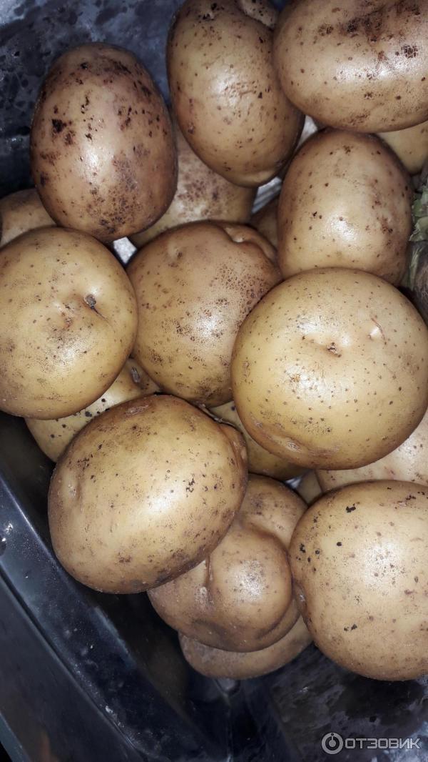 Картофельный Диета Отзывы. Картофельная диета для быстрого похудения: меню, рецепты, отзывы, фото до и после диеты