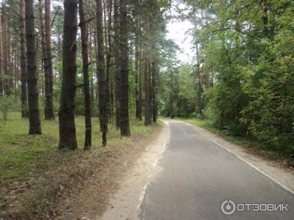фото дорог в орловском полесье довелось худеть целых